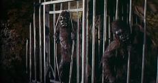 Die Affen ...