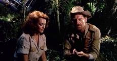 Maggie (Nieves Navarro) und Donald (Donald O'Brien)