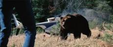 Der Bär ...